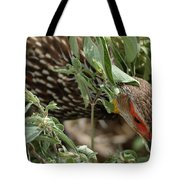 Yellow-necked Spurfowl Tote Bag