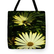 Yellow Osteospermums Tote Bag