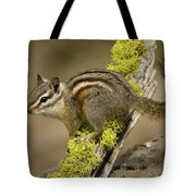 Yellow Pine Chipmunk Tote Bag