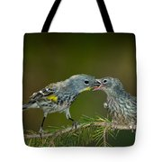 Yellow-rumped Warbler Feeding Young Tote Bag