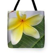 Yellow Star Plumeria Tote Bag