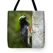 Yellow-tufted Woodpecker Tote Bag
