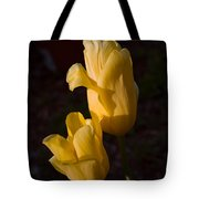 Yellow Tulips Last Rays Tote Bag