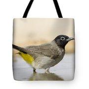 Yellow-vented Bulbul Pycnonotus Xanthopygos Tote Bag