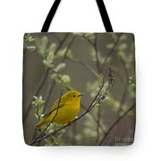 Yellow Warbler -1 Tote Bag