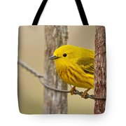 Yellow Warbler Pictures 90 Tote Bag