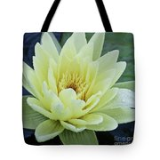 Yellow Water Lily Nymphaea Tote Bag