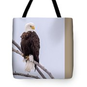 Yellowstone Bald Eagle Tote Bag