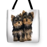 Yorkie Puppies Tote Bag