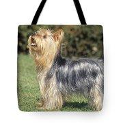 Yorkshire Terrier Dog Tote Bag