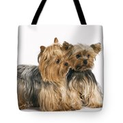 Yorkshire Terrier Dogs Tote Bag