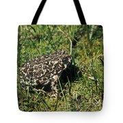 Yosemite Toad Bufo Canorus Tote Bag