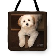 Yoshi Is One Today - Havanese Puppy Tote Bag