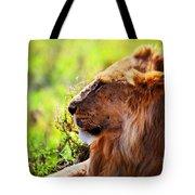 Young Adult Male Lion On Savanna. Safari In Serengeti Tote Bag