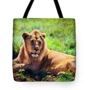 Young Adult Male Lion On Savanna. Safari In Serengeti. Tanzania Tote Bag
