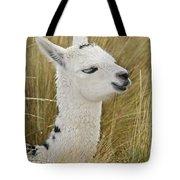 Young Alpaca Tote Bag