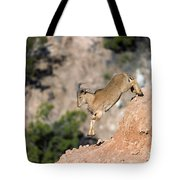 Young Auodad Sheep Descending The Canyon Tote Bag