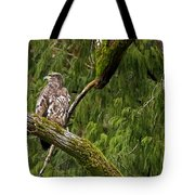 Young Baldy 2 Tote Bag