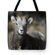 Young Bighorn Sheep Tote Bag