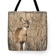 Young Black-tailed Deer Tote Bag