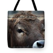 Young Braunvieh Bull Tote Bag