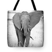 Young Bull Elephant Tote Bag