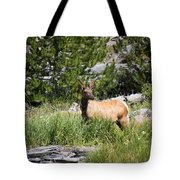 Young Bull Elk - Yellowstone National Park - Wyoming Tote Bag