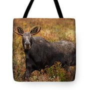 Young Bull Moose Being Aggressive Tote Bag