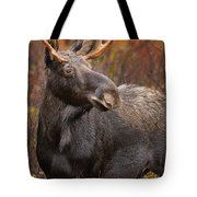 Young Bull Moose Tote Bag