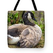 Young Canada Goose Tote Bag