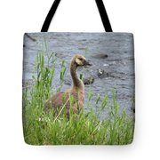 Young Canadian Goose Tote Bag