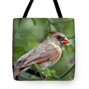 Young Cardinal Tote Bag