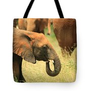 Young Elephant Tote Bag