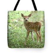 Young Fawn In The Woods Tote Bag