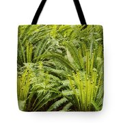 Young Fiddleheads Tote Bag