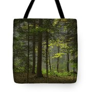 Young Forest Tote Bag