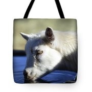 Young Goat Tote Bag
