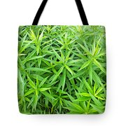 Young Goldenrod Before Blossoms Tote Bag