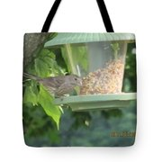 Young Gray Bird Tote Bag