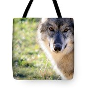 Young Gray Wolf In Light Tote Bag