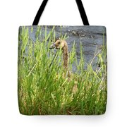 Young Grazing Goose Tote Bag