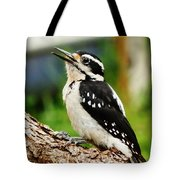 Young Hairy Woodpecker Tote Bag