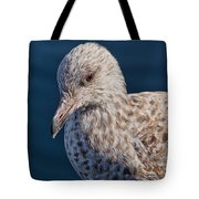 Young Herring Gull Tote Bag