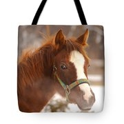 Young Horse In Winter Day Tote Bag