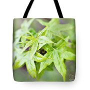 Young Leaves Tote Bag
