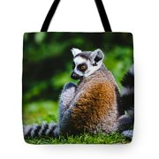 Young Lemur Tote Bag