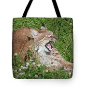 Young Lynx Yawning Tote Bag
