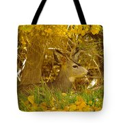 Young Male Buck Tote Bag