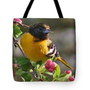 Young Male Oriole Tote Bag