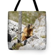 Young Marmot Tote Bag